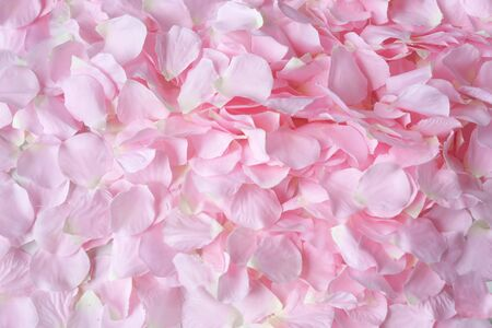 many pink rose petals put on a white background fully in the frame 免版税图像