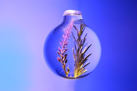 flower and rosemary are contained inside sphere glass jar on blue background