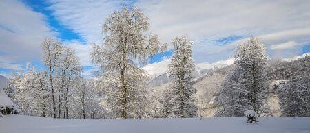 Fresh snow in the mountains of Krasnaya Polyana. Sochi, Russia