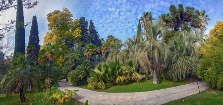 Park arboretum in Sochi deservedly has the status of a monument of landscape art.