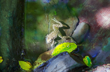 Frog in the canyon of the river Dagomys.