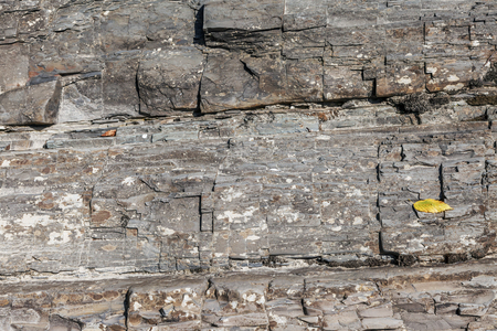 Textures, reliefs and structure on the stone.