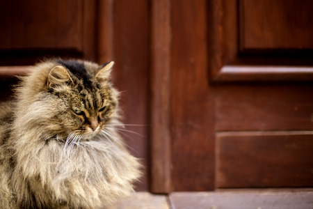 purring: cat on the porch