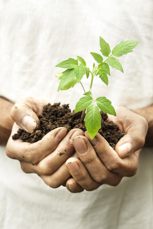earth handful: A man hands holding a fragile green young plant with care. Symbol for new beginning new life, spring. To take care for our planet.