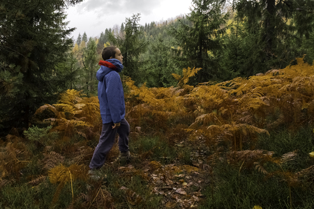 contributes: Active lifestyle contributes to well-being. Curious child wander through the woods taking care of his body and mind. Fresh air helps our lungs stay healthy.