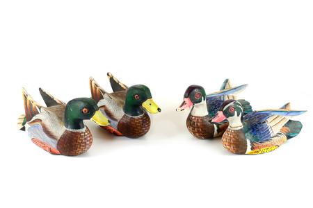 Duck family photo