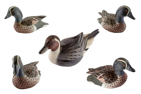 Duck isolated on white background photo