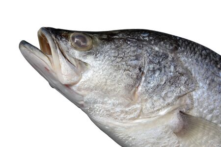 Macro shot of barramundi, asian seabass, giant seaperch or silver seaperch isolated on white background.