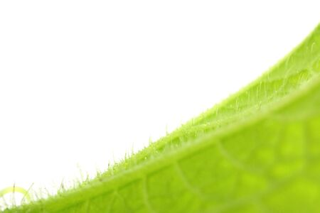 Closeup nature view of green leaf texture isolated on white background. Reklamní fotografie