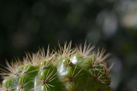 Closeup cactus with natural background.