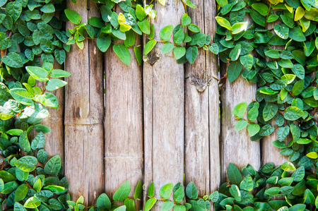 Bamboo panels with ivy growing frame Stock Photo