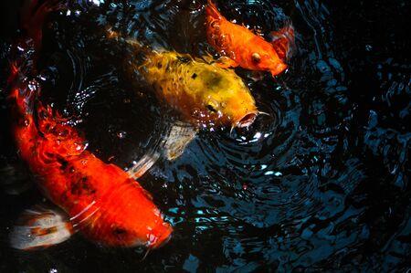 Fancy Fish Craft Stock Photo - 7808004