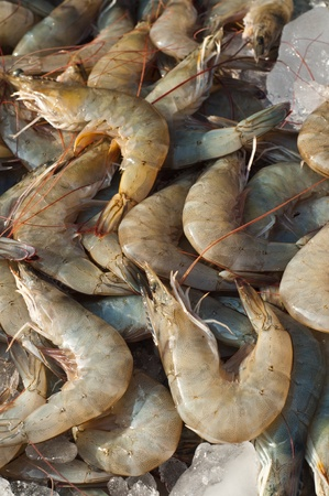 Fresh shrimps  in the ice in market,Thailand photo