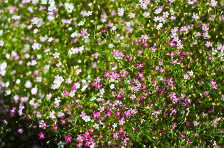 flores peque�as: Peque�as flores Foto de archivo