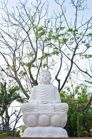 The sitting Bodhisattva Statue with big tree background photo