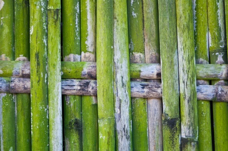Green bamboo weave  fence Stock Photo