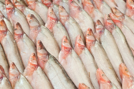 Many fresh fishes in the market,Thailand photo