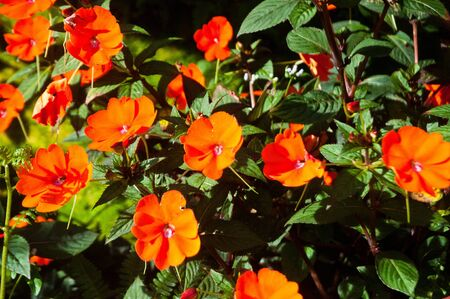 Orange flower in the morning Stock Photo - 13534193