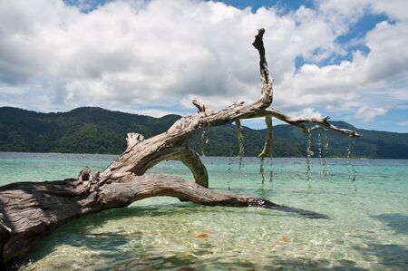 coral bark: Trunk on the beach,Thailand