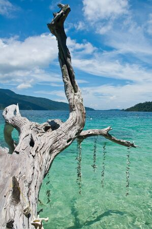 coral bark:  Dry branches overhanging the sea, Thailand Stock Photo