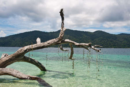 coral bark: Branch of tree trunk in the sea of Thailand