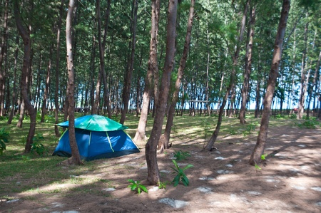 Blue tent in the pine forest photo