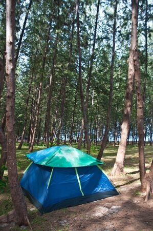 Tent in the pine forest photo
