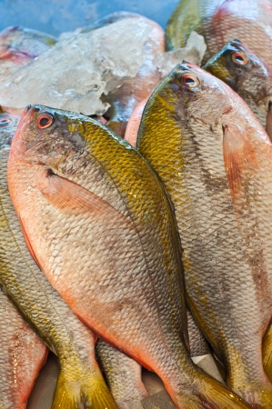 Sea bream fresh fish closeup Stock Photo - 13894384