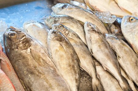 Fresh fish seafood in market Stock Photo - 13894383