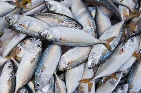 Fresh Chub Mackerel Seafood  Fish