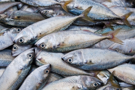 chub: Chub mackerel in sea market Stock Photo