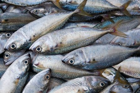 Mackerels in a local fish market for sale  photo