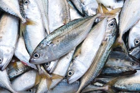 chub: Fresh Chub Mackerel Sea Fish in the market,Thailand Stock Photo