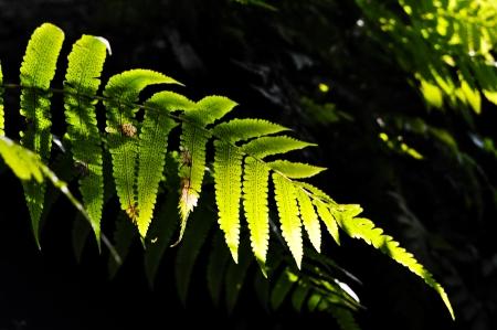 양치 식물 배경