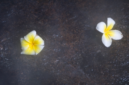 Frangipani flowers on the rock with fog photo