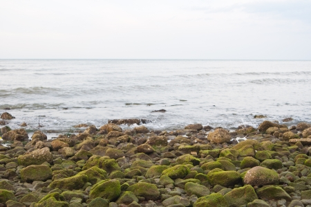 algas verdes: Las algas verdes en las rocas en la playa