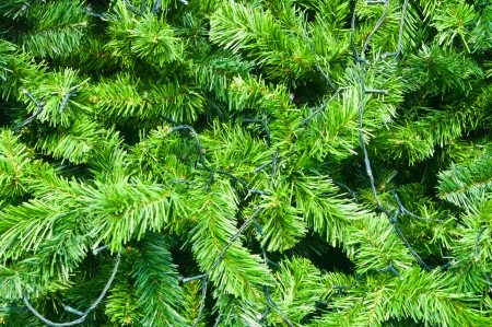 Green prickly  branches of a fir-tree or pine artificial photo