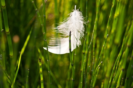 Feather against green grass background