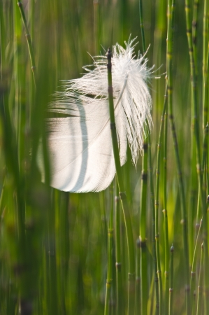 quivering: Grass and feather