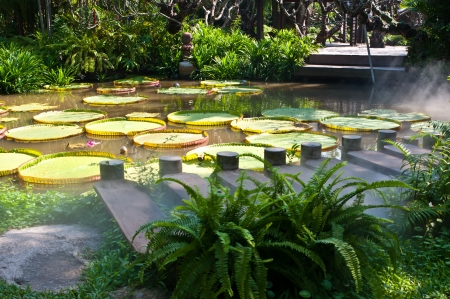 Wooden foot bridge and amazon water lily in the pond Stock Photo - 16951697