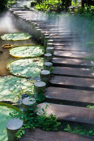 vlonder: Houten loopbrug met zonnestraal in het park
