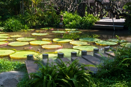 Amazon water lily and footbridge  photo