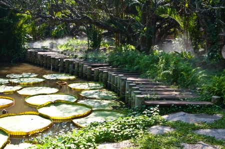 monet: Victoria Regia - the largest water lily and footpath