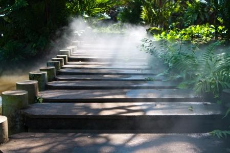 vlonder: Houten loopbrug met mistige Stockfoto