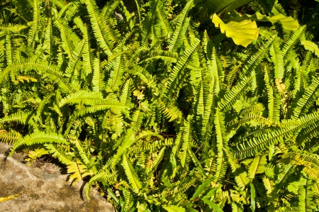 Group of ferns growing in the forest Stock Photo - 16953871