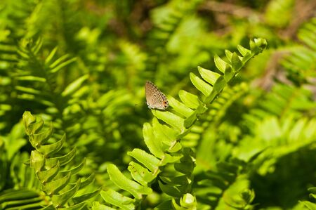 Butterfly on ferns growing in the forest Stock Photo - 16953863