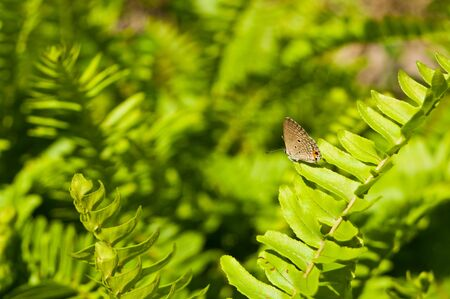 Butterfly on green fern laef Stock Photo - 16953864