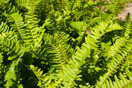 Butterfly on group of green ferns Stock Photo - 16953865