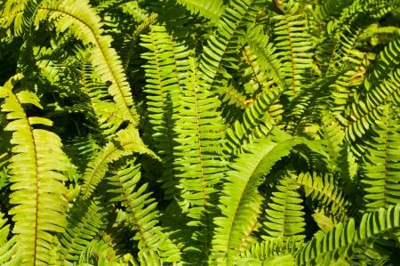 Fern leaf Stock Photo - 16953869