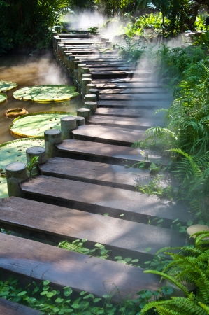 bridges: Foggy cover on the foot bridge in the natural park Stock Photo